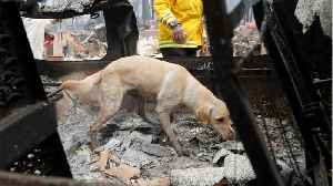 Cadaver Dogs Lead Grim Search For Fire Victims [Video]