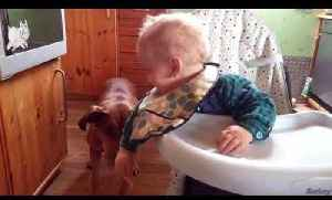 Dog Steals Cracker From Laughing Baby in High Chair [Video]