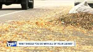 What are you suppose to do with all those leaves? [Video]