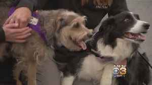 Students, Administrators At La Salle University Get Special Visit From 'Top Dogs' [Video]