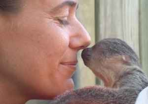 Baby Sloth at Brevard Zoo Shows Zookeeper Some 'Eyebrow Love' [Video]
