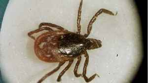 Reported tick diseases hit all-time high [Video]