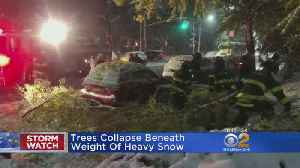 Trees Collapse Beneath Weight Of Heavy Snow [Video]