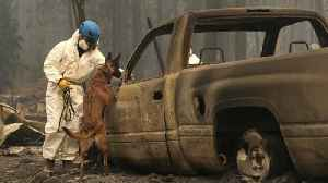 More Than 630 Reported Missing in Deadly Camp Fire [Video]