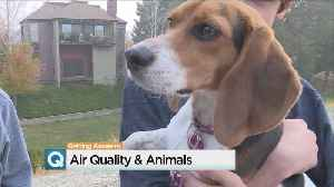 Unhealthy Air Affects Pets, Too [Video]