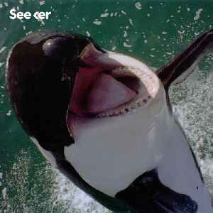 The Future of Killer Whales Isn't Looking Good [Video]