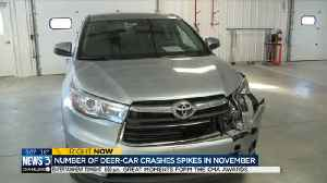 As number of deer-car crashes spike, so does price tag for repairs [Video]