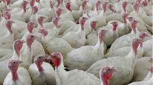 Turkey Products Recalled Due To Salmonella, Right Before Thanksgiving [Video]