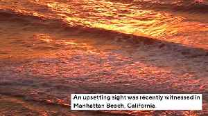 Dolphin Suffering From Bullet Wound Found Dead On California Beach [Video]