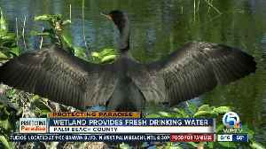 PBC wetlands created through nearby wastewater facility [Video]
