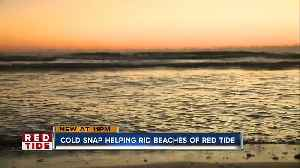 Cold snaps play small role in combating red tide, scientists say [Video]