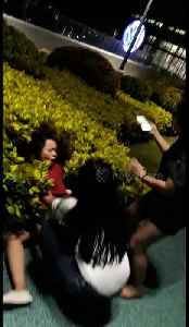 Girl falls into hedge as she poses for the camera [Video]