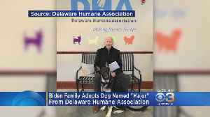 Biden Family Adopts Dog From Delaware Humane Association [Video]