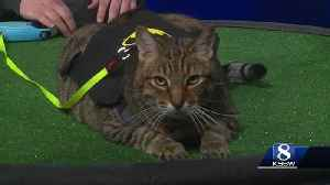 Pet of the Weekend: Junior [Video]