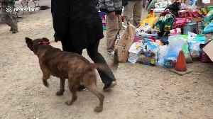 Displaced pets reunited with owners after devastating Camp Fire [Video]