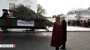 President Trump, Melania Trump Participate In White House Christmas Tree Delivery [Video]