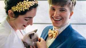 Seattle Couple Opts for 'Kitten Hour' at Their Wedding Instead of Cocktails [Video]