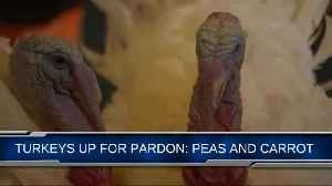 'Peas' and 'Carrot' are the two turkeys up for a Presidential pardon [Video]