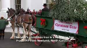 The Trumps receive White House Christmas tree [Video]