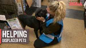 Volunteers care for pets displaced by California wildfires [Video]