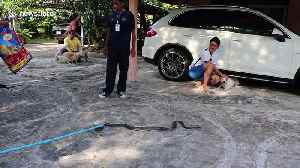 Two pet dogs spark chaos after chasing king cobra in front yard [Video]