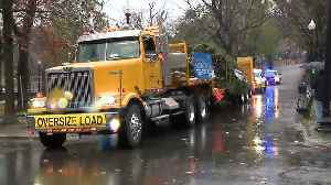 Boston's official Christmas tree arrives [Video]