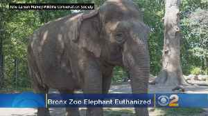 Maxine The Elephant Euthanized [Video]