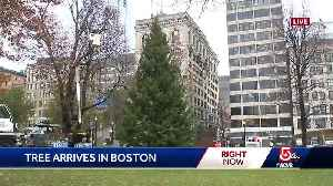 City's official Christmas Tree arrives in Boston [Video]