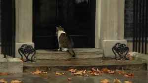 Downing Street cat helped out of the rain by police officer [Video]