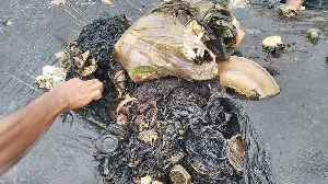 115 plastic cups, 4 bottles and 2 flip-flops found inside dead whale [Video]