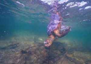 Diver Captures Heartbreaking Video of Sea Turtles Killed by Marine Waste [Video]