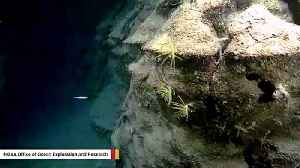 Underwater Landscape Captured On Camera Looks Like Part Of Grand Canyon [Video]