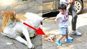Taimur Ali Khan's CUTE reaction on CAT while spotted with Kareena Kapoor Khan; must watch|FilmiBeat [Video]