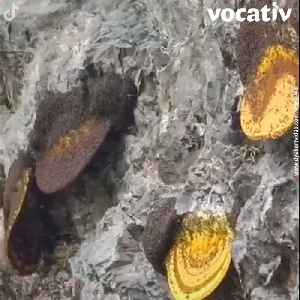 Harvesting Honey on Cliffs in China is One of The World's Most Dangerous Jobs [Video]