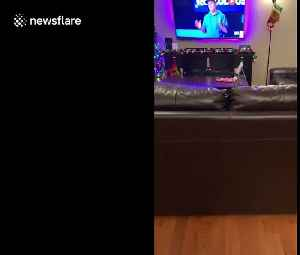 Needy sausage dog dances in anticipation of owner returning [Video]
