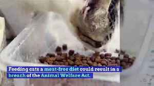Owners Feeding Cats a Vegan Diet Could Risk Breaking the Law [Video]