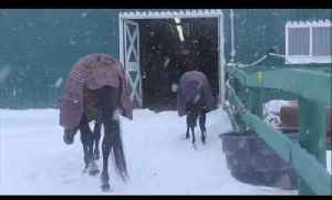 Hanoverian Fillies See Snow for First Time [Video]