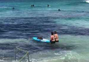 Lifeguard Rescues Shark That Almost Reached Shore at Bondi Beach [Video]