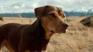 'A Dog's Way Home' Trailer [Video]