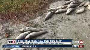 Parts of Southwest Florida see more red tide blooms [Video]
