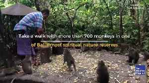700 Monkeys Roam Free in This Sacred Forest [Video]
