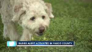 Raccoon tests positive for rabies in Pasco County, officials urging residents to vaccinate pets [Video]