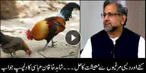 Here is Shahid Khaqan Abbasi's interesting take on PM Imran Khan's chicken, calves plan to improve economy [Video]