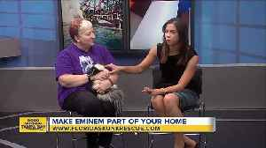 Rescues in Action: Eminem the Skunk [Video]
