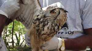 News video: Touching moment wild owl flies back to freedom after accident in India