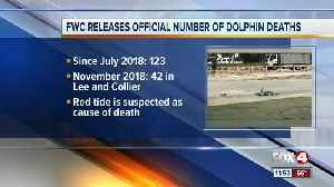 FWC Releases Official Number of Dolphin Deaths [Video]