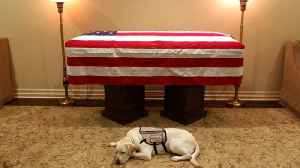 News video: Service dog Sully to accompany 41st President one last time