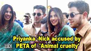 Priyanka -Nick accused by PETA of  'Animal cruelty' [Video]