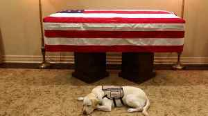 Sully the Service Dog Lies by George H.W. Bush's Casket in Touching Photo [Video]