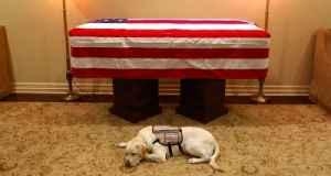 George H.W. Bush's Service Dog Lays by His Casket [Video]